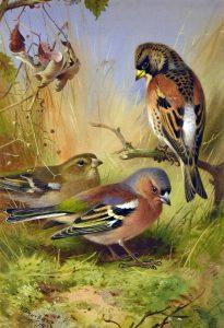 Archibald Thorburn - Carnes Fine Art
