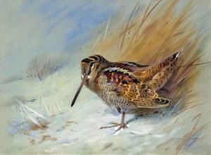 Archibald Thorburn Painting For Sale