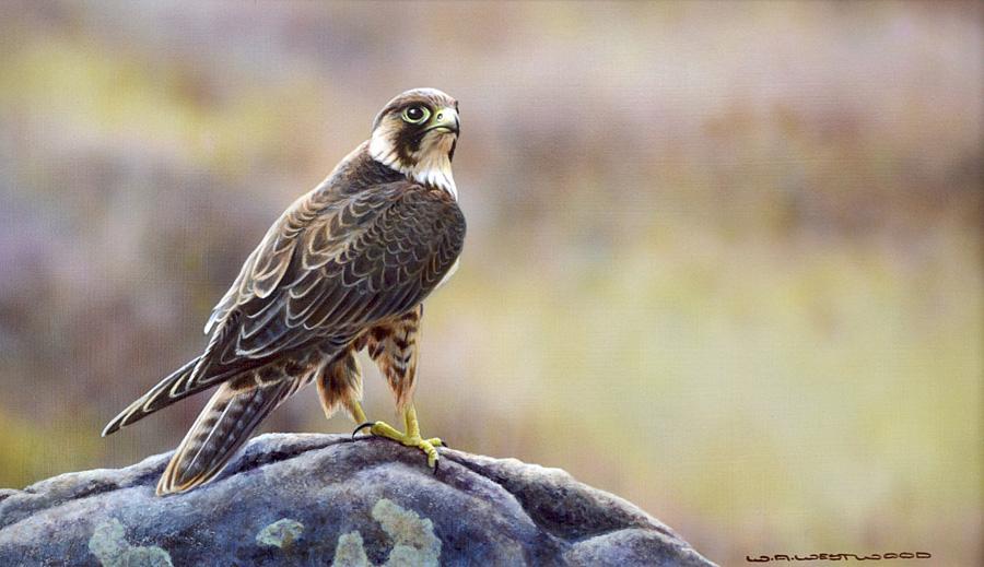 Carnes Fine Art - Wildlife Paintings
