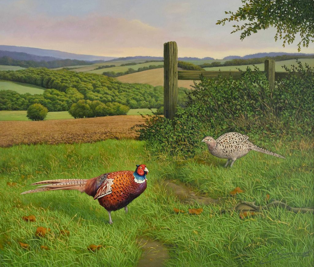 Foraging Pheasants (NEW)