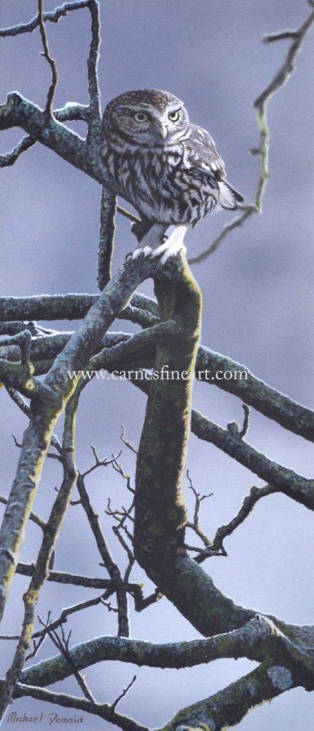 Little Owl (NEW)