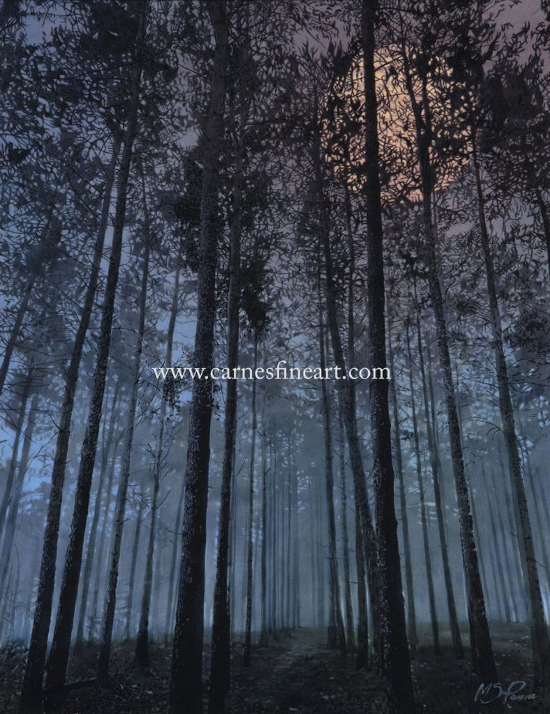 Night-time in the Forest (NEW)