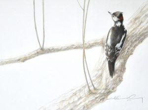 woodpecker painting