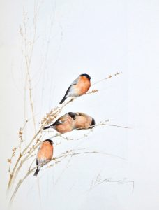 Bullfinch Painting
