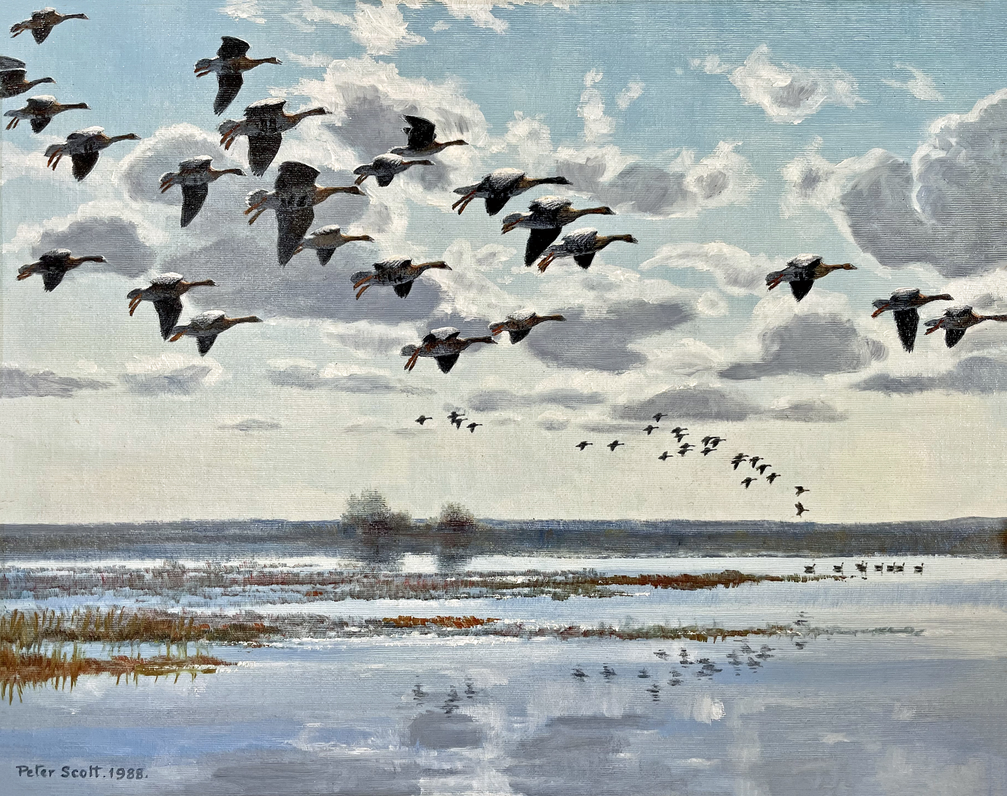White Fronted Geese (NEW)