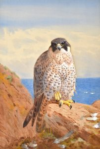 Archibald Thorburn Paintings - Carnes Fine Art