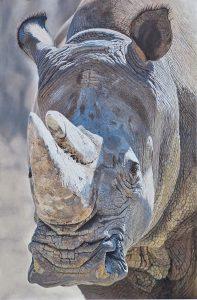 Rhino Oil Painting