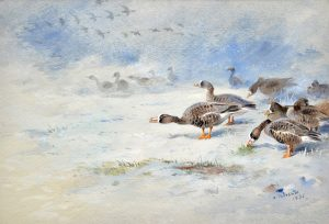 archibald thorburn watercolour for sale