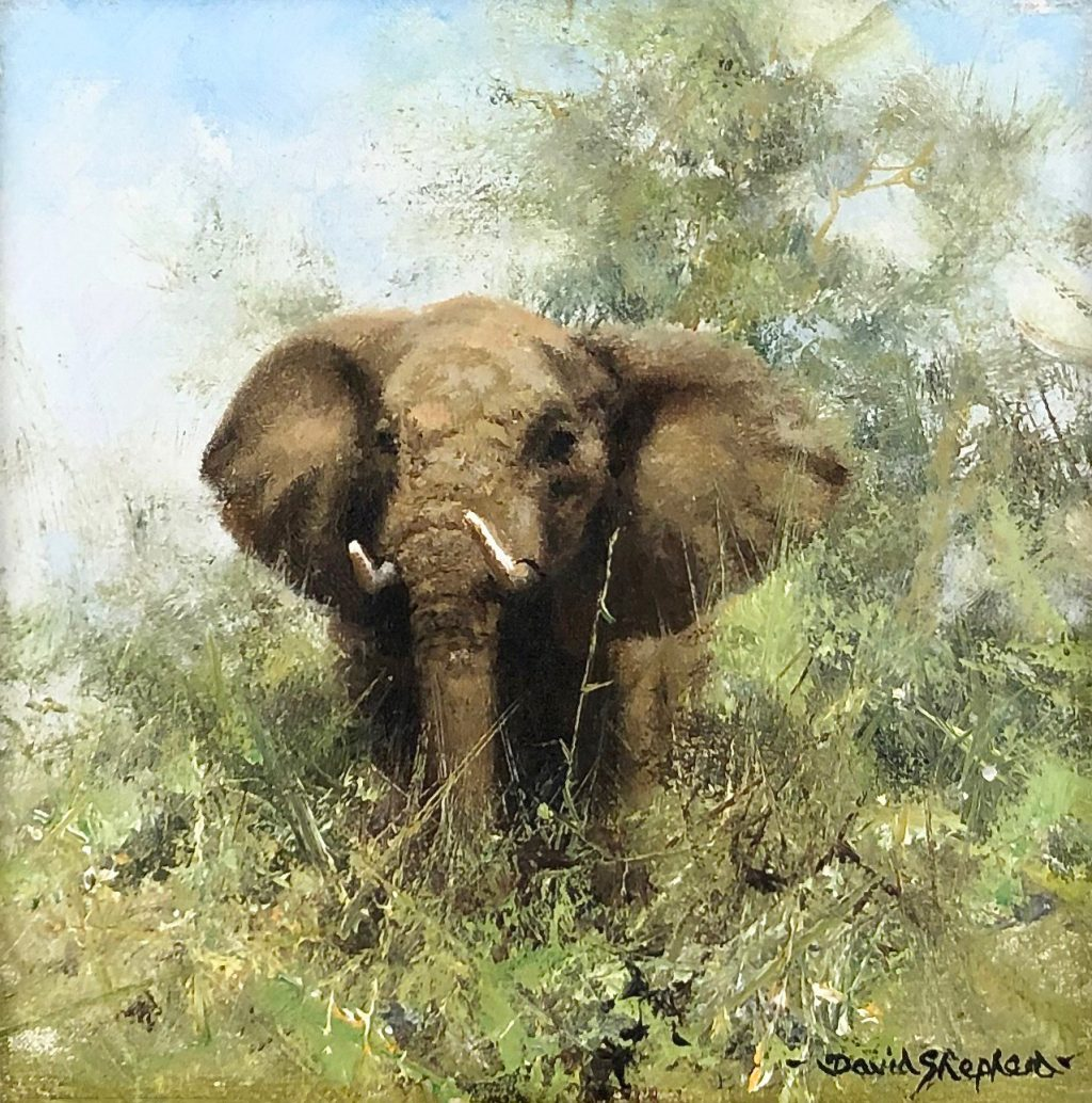 African Elephant by David Shepherd