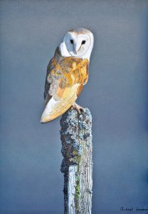 Barn Owl painting at Carnes Fine Art
