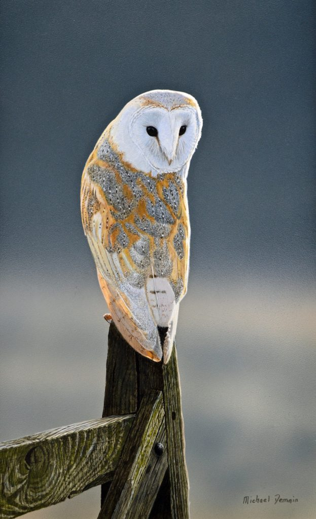 Barn Owl (NEW)