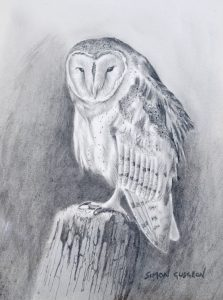 Simon Gudgeon pencil drawing 'Barn Owl'