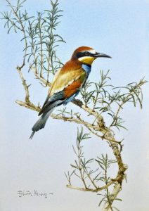 wildlife paintings - Carnes Fine Art