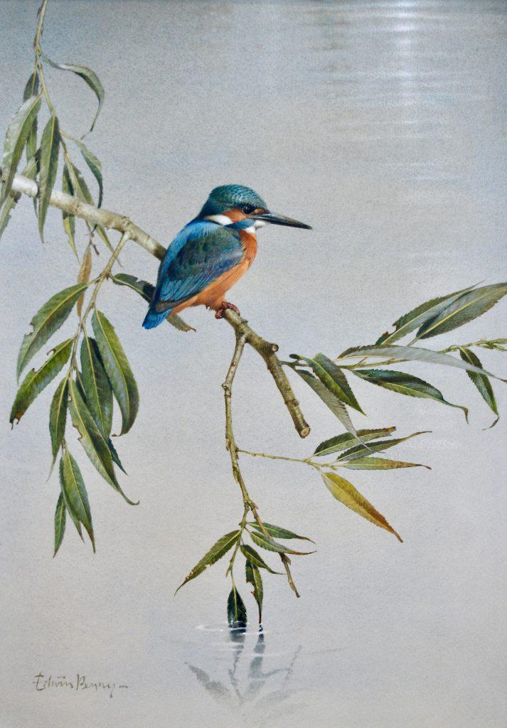 Kingfisher (NEW)