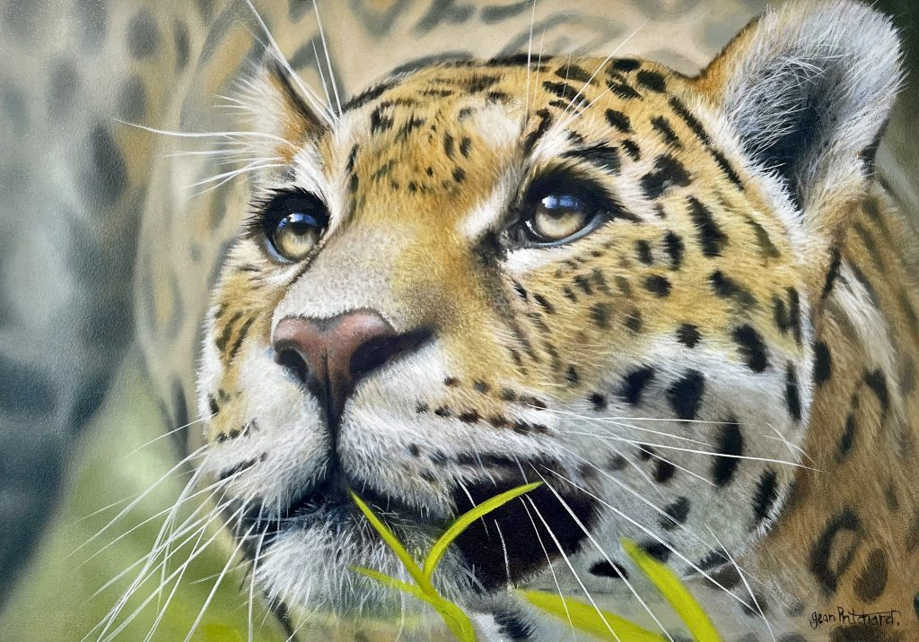 Jaguar (SOLD)