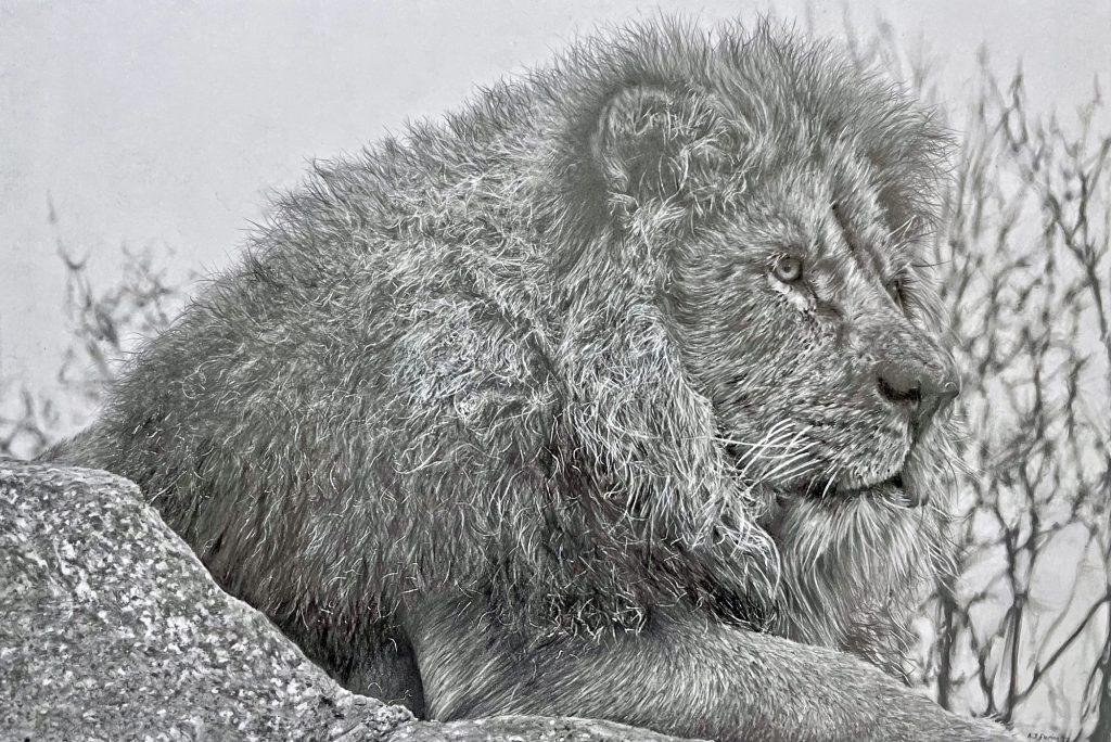 Lion (NEW)