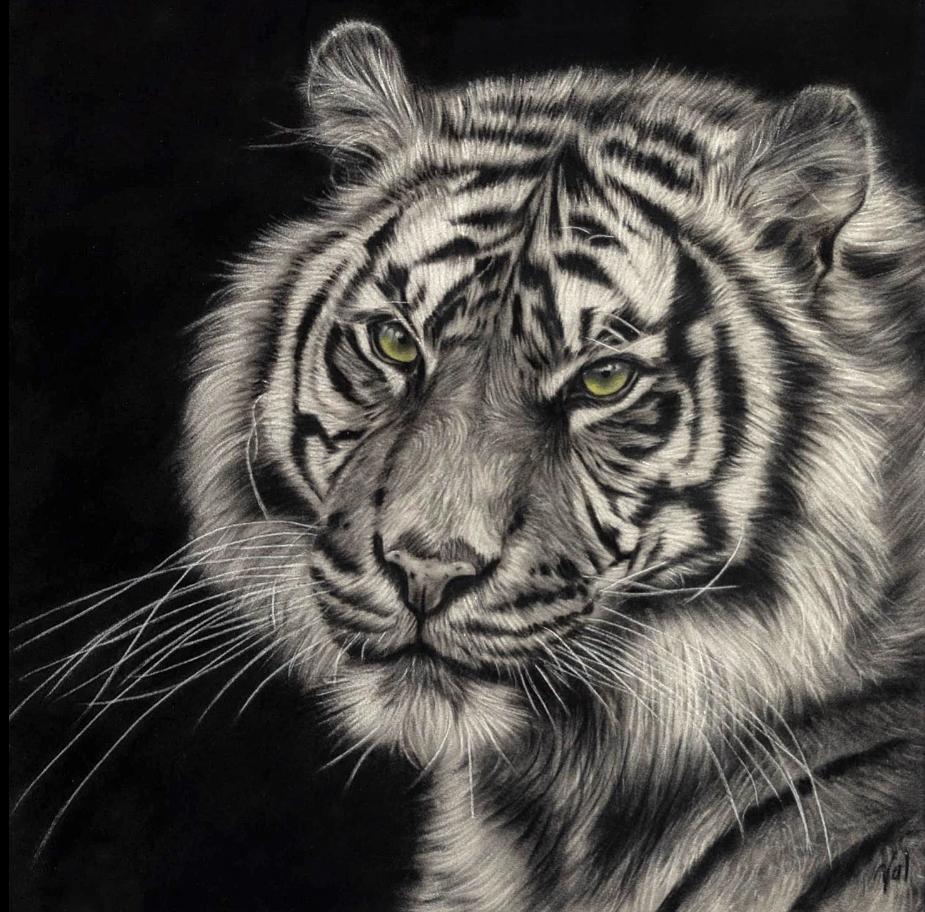 Tiger (NEW)