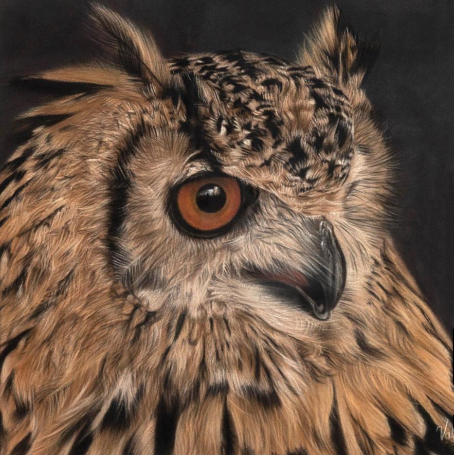 Long-eared Owl (NEW)